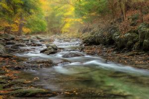 upstream-fog-bill-wakeley